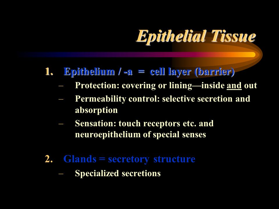 Epithelial Tissue Epithelium / -a = cell layer (barrier)