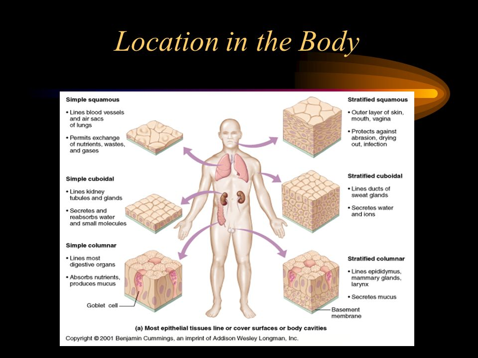 Location in the Body