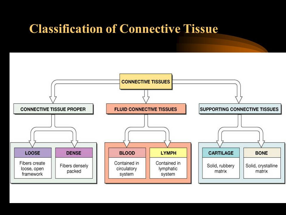 Classification of Connective Tissue