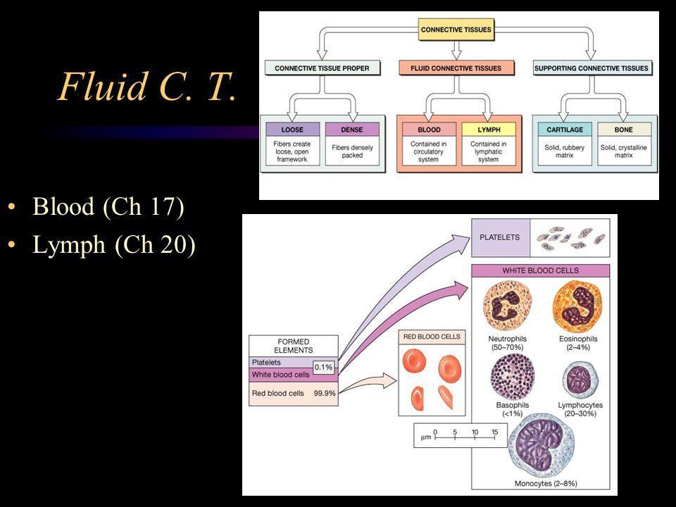 Fluid C. T. Blood (Ch 17) Lymph (Ch 20)