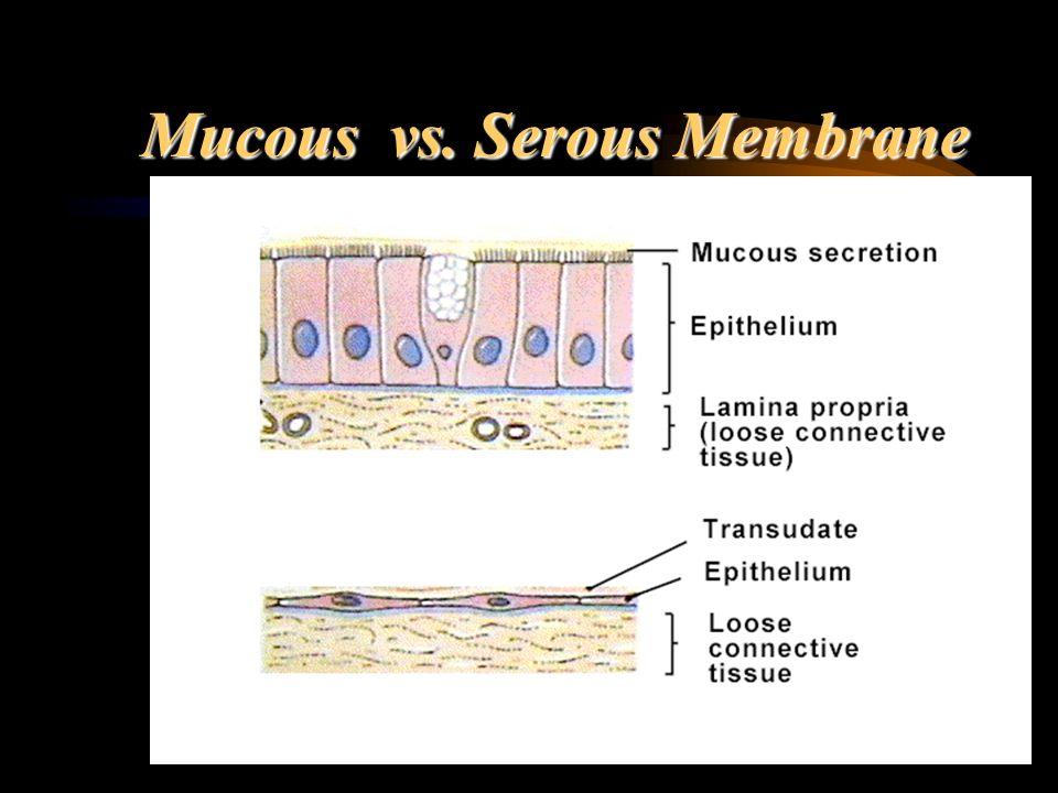 Mucous vs. Serous Membrane