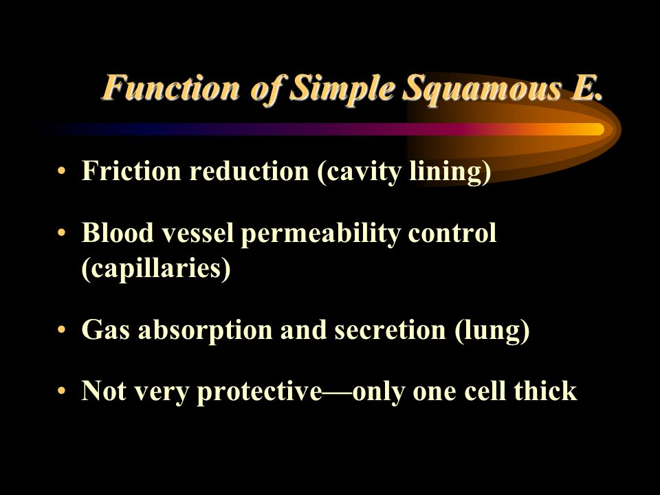 Function of Simple Squamous E.