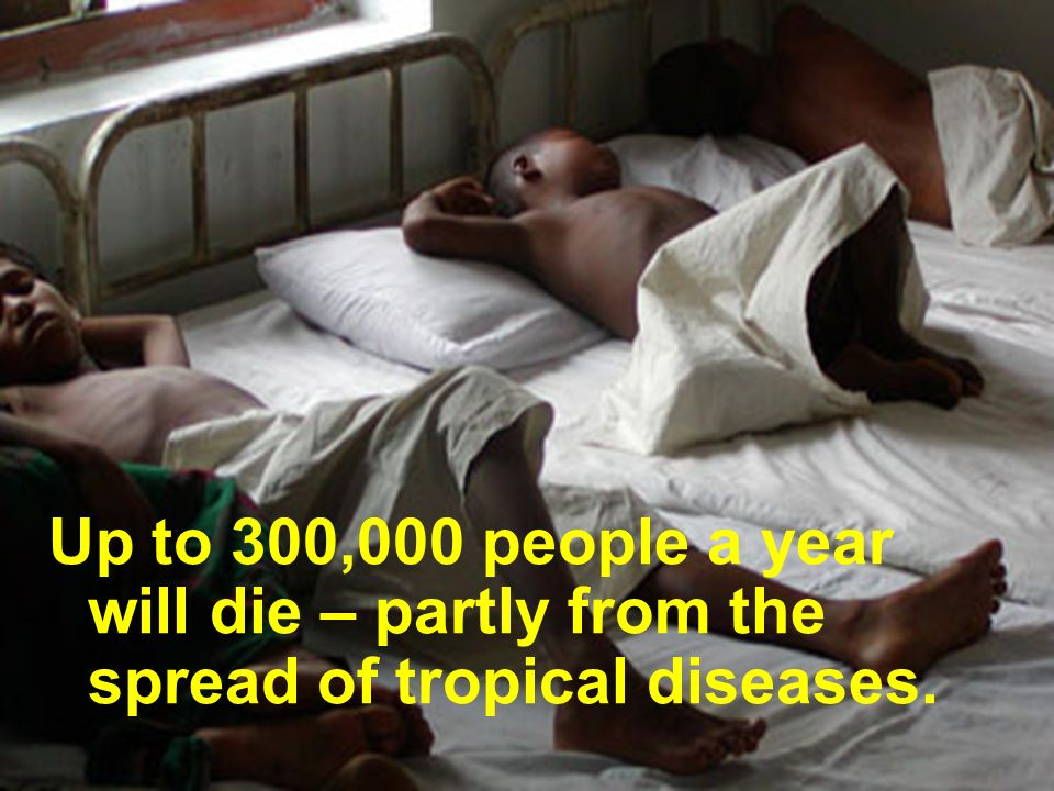 Up to 300,000 people a year will die – partly from the spread of tropical diseases.