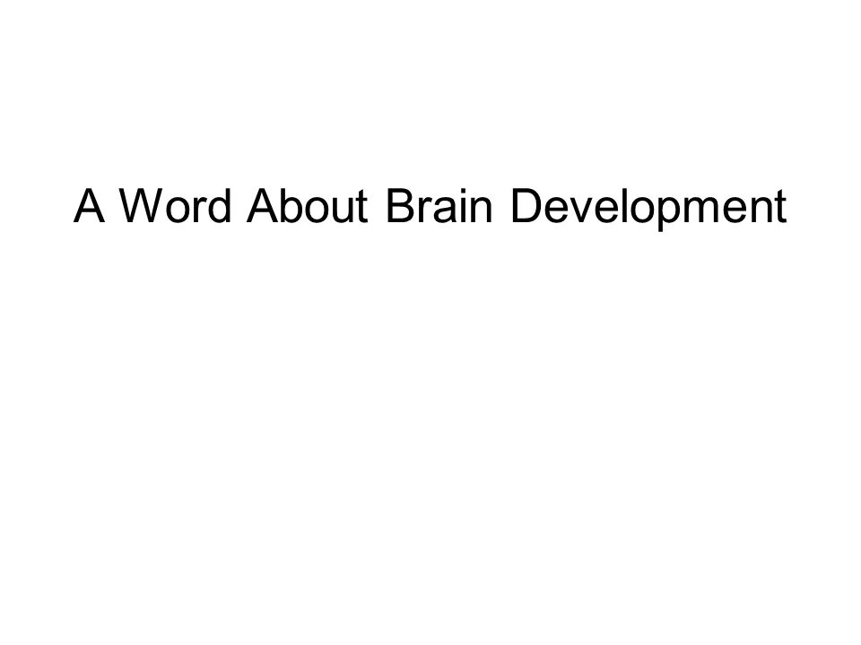 A Word About Brain Development