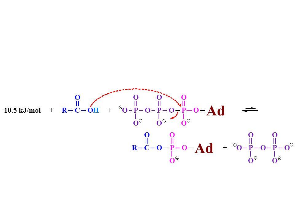 R C O H + 10.5 kJ/mol P Ad