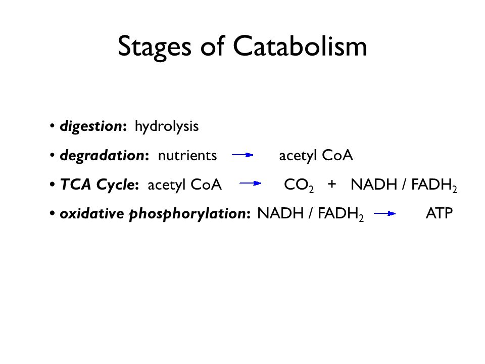 Stages of Catabolism • digestion: hydrolysis