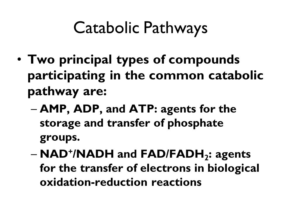 Catabolic Pathways Two principal types of compounds participating in the common catabolic pathway are: