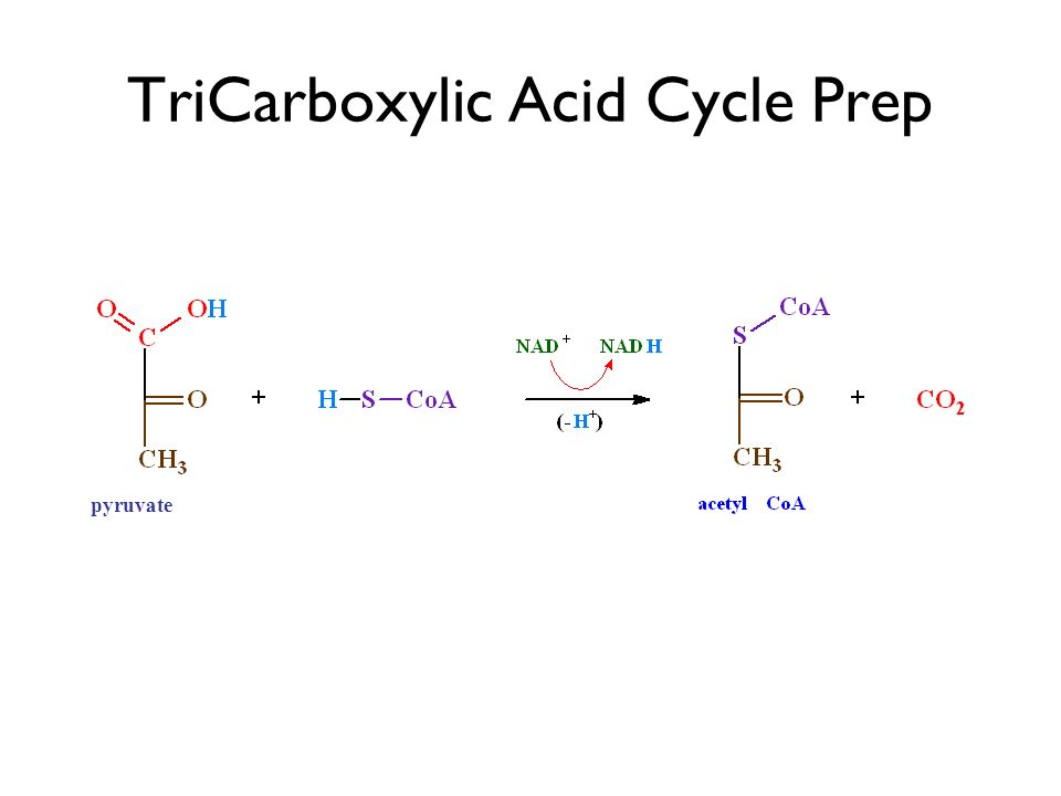 TriCarboxylic Acid Cycle Prep