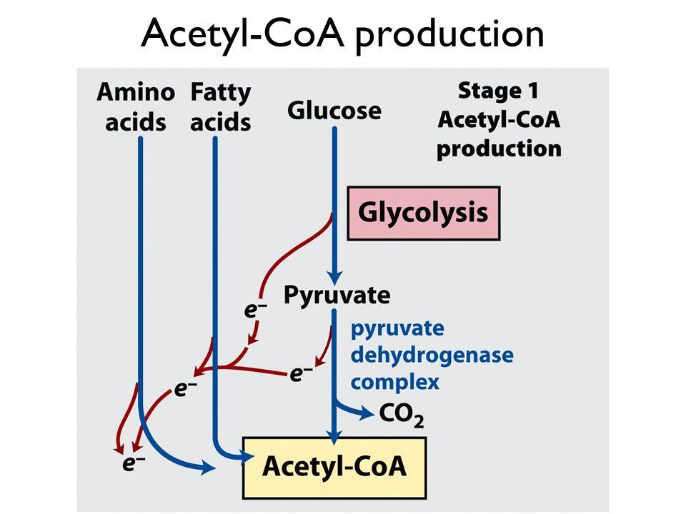Acetyl-CoA production