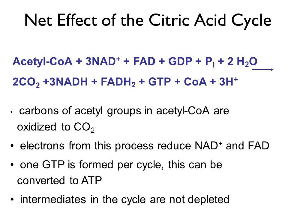 Net Effect of the Citric Acid Cycle