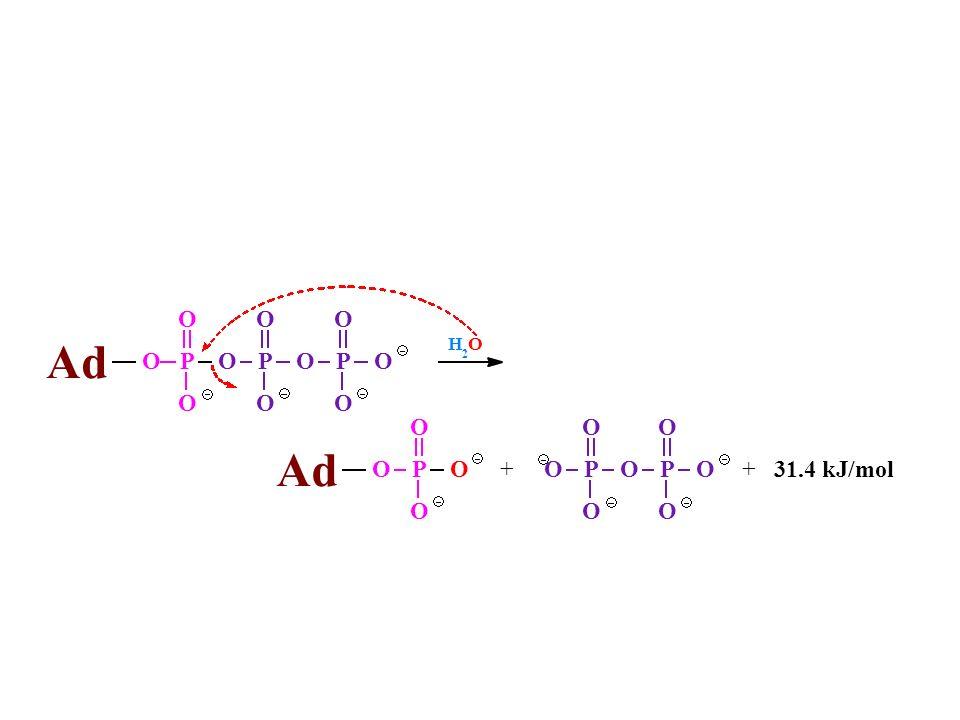 H 2 O 31.4 kJ/mol P Ad +