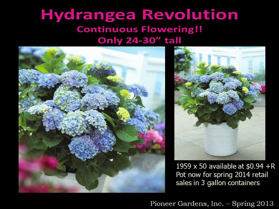 1959 x 50 available at $0.94 +RPot now for spring 2014 retail sales in 3 gallon containers.