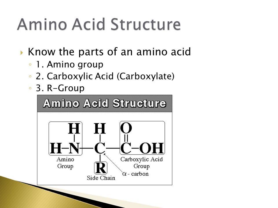 Amino Acid Structure Know the parts of an amino acid 1. Amino group