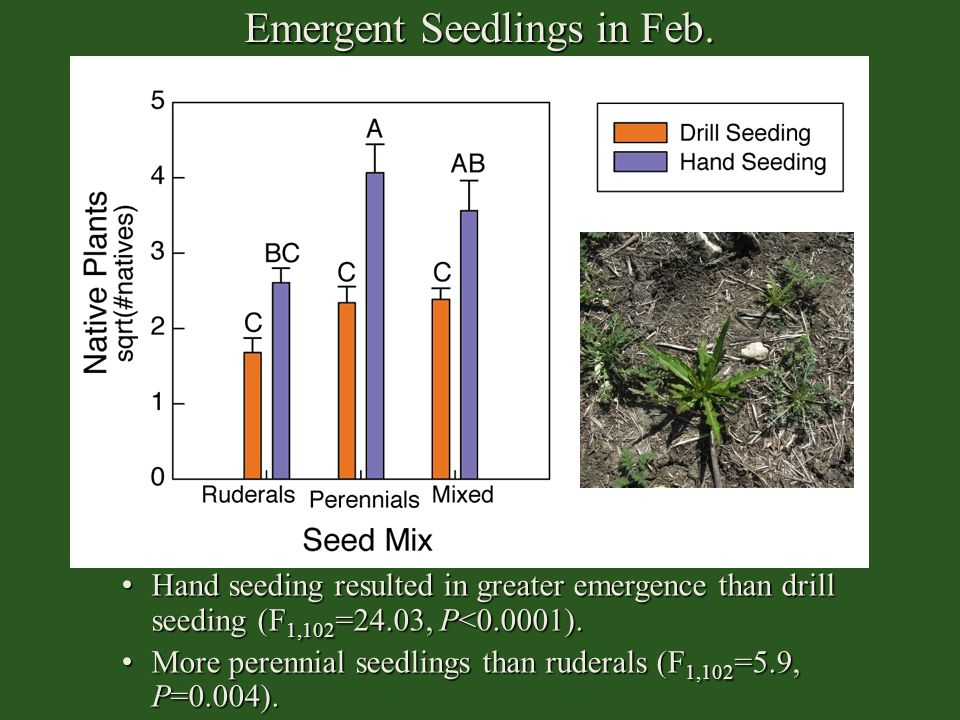 Emergent Seedlings in Feb.