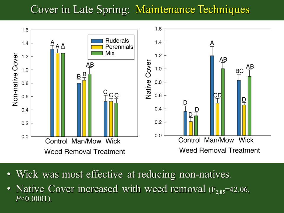 Cover in Late Spring: Maintenance Techniques