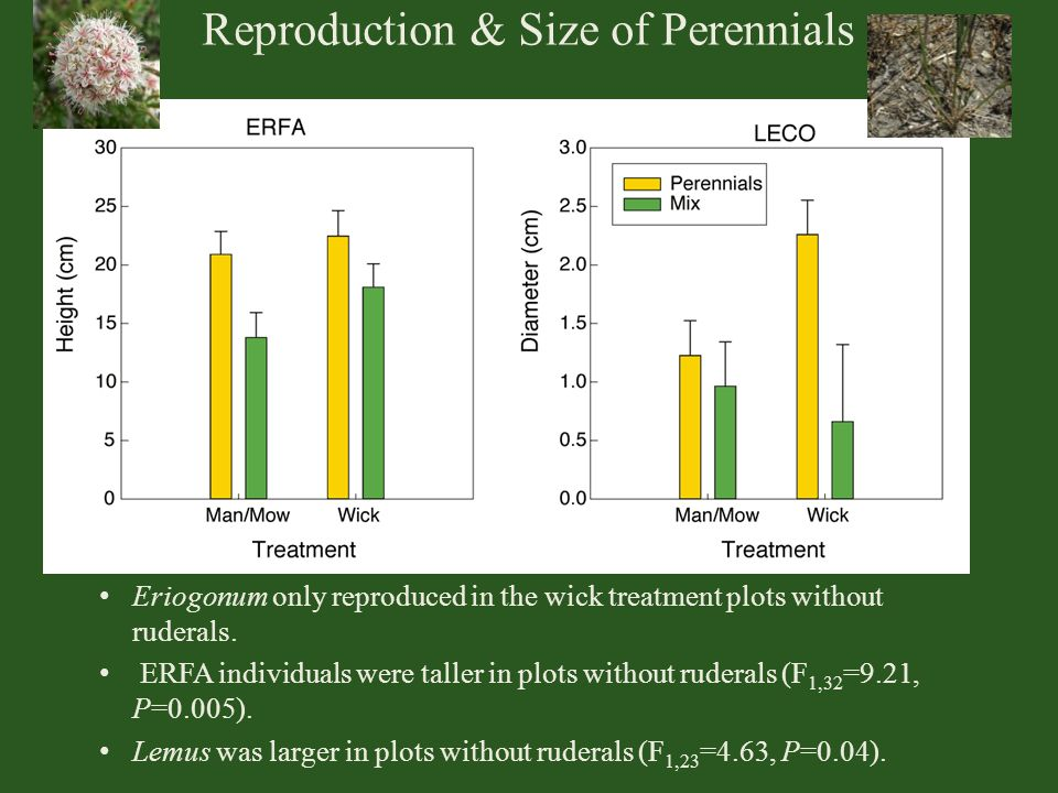 Reproduction & Size of Perennials