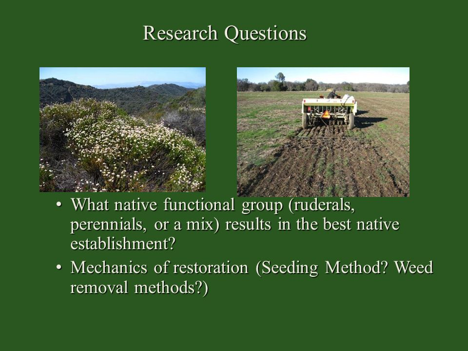 Research Questions What native functional group (ruderals, perennials, or a mix) results in the best native establishment