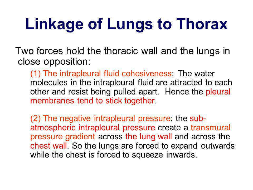 Linkage of Lungs to Thorax