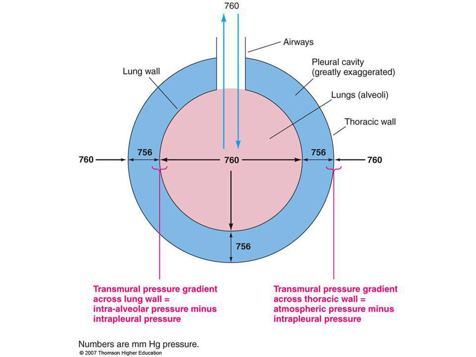 Figure 13.8: Transmural pressure gradient.