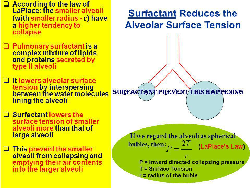 Surfactant Reduces the Alveolar Surface Tension