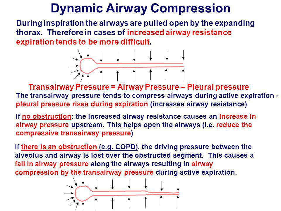 Dynamic Airway Compression