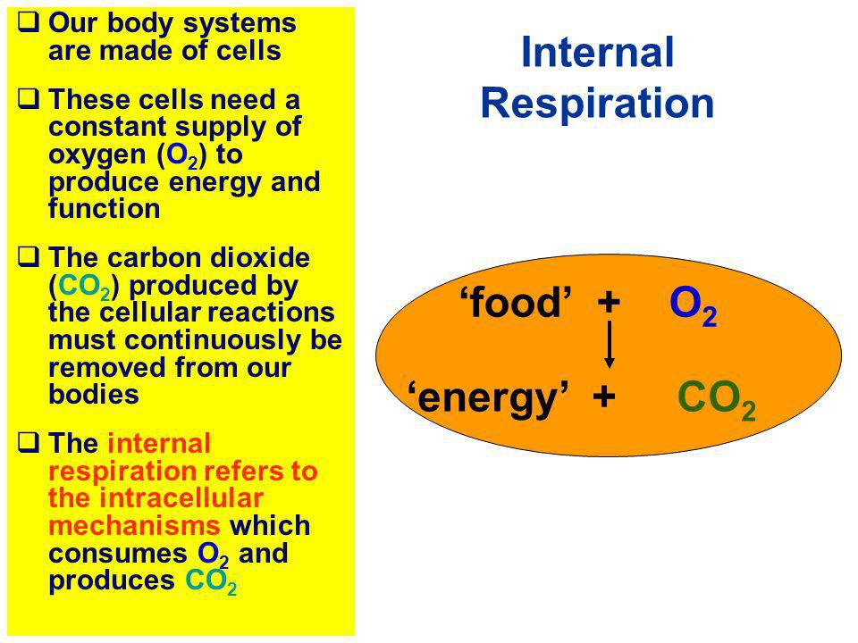 Internal Respiration 'energy' + CO2 Our body systems are made of cells