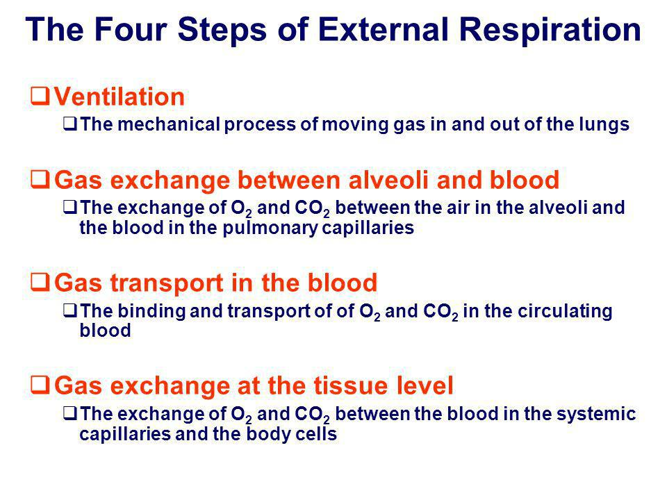 The Four Steps of External Respiration