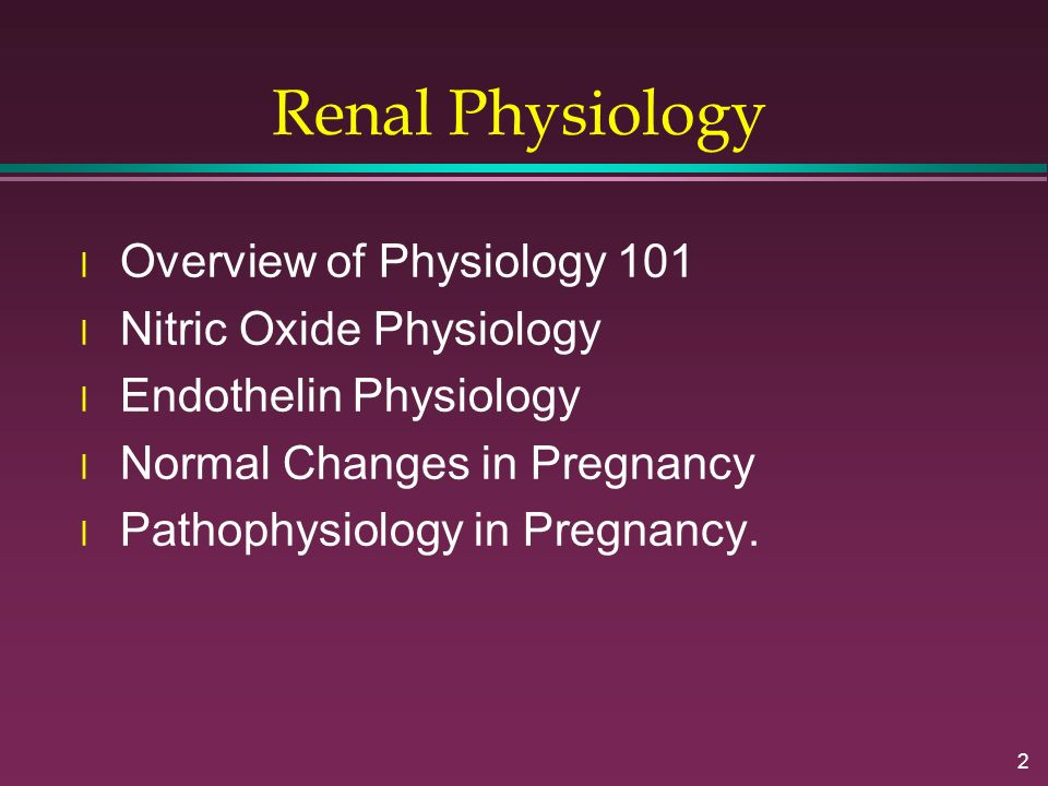 Renal Physiology Overview of Physiology 101 Nitric Oxide Physiology