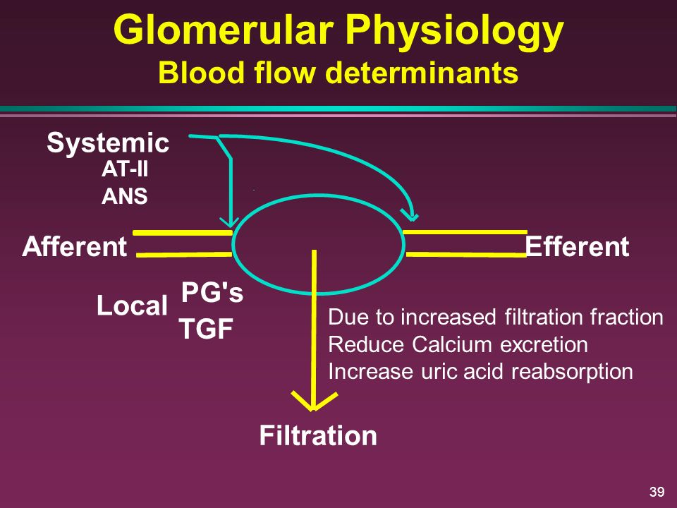 Glomerular Physiology Blood flow determinants