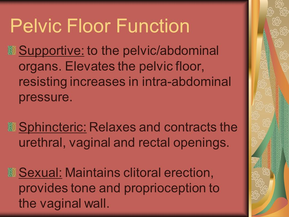Pelvic Floor Function Supportive: to the pelvic/abdominal organs. Elevates the pelvic floor, resisting increases in intra-abdominal pressure.