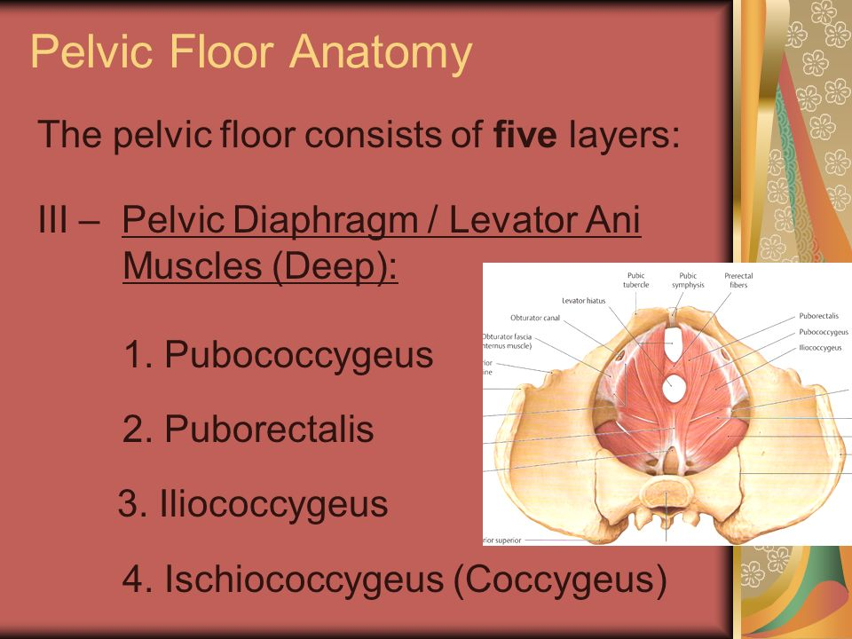 Pelvic Floor Anatomy The pelvic floor consists of five layers: