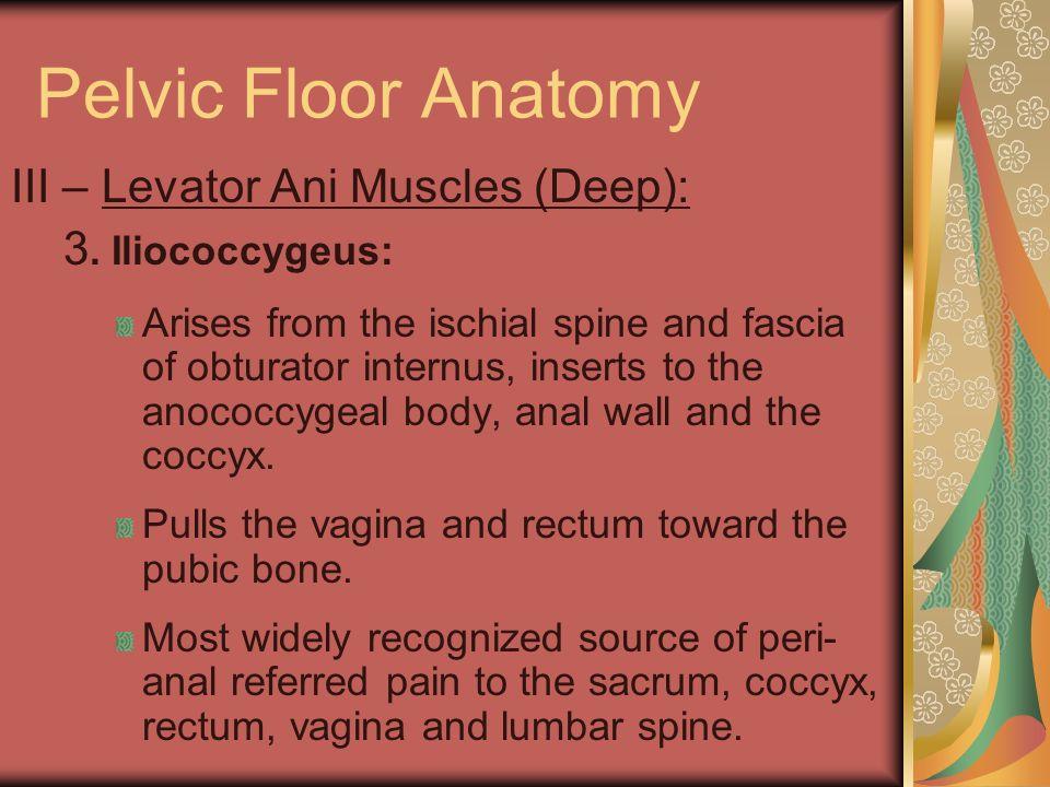 Pelvic Floor Anatomy III – Levator Ani Muscles (Deep):
