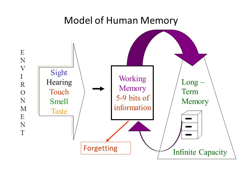 Model of Human Memory Sight Hearing Touch Smell Taste Working Memory