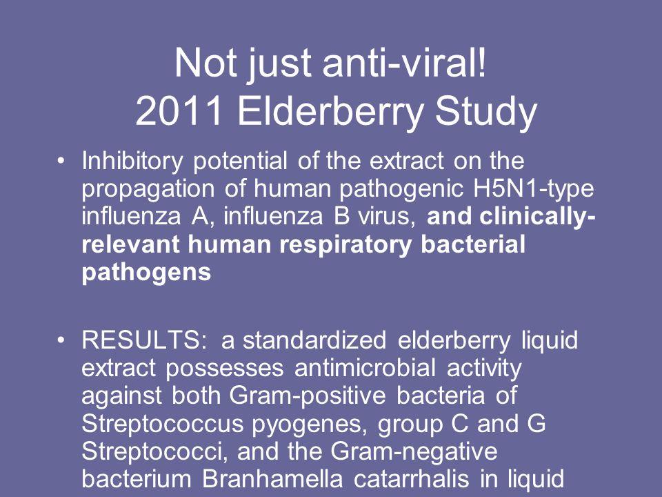 Not just anti-viral! 2011 Elderberry Study