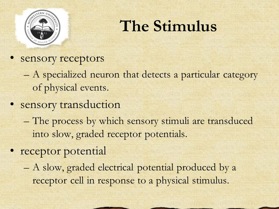 The Stimulus sensory receptors sensory transduction receptor potential