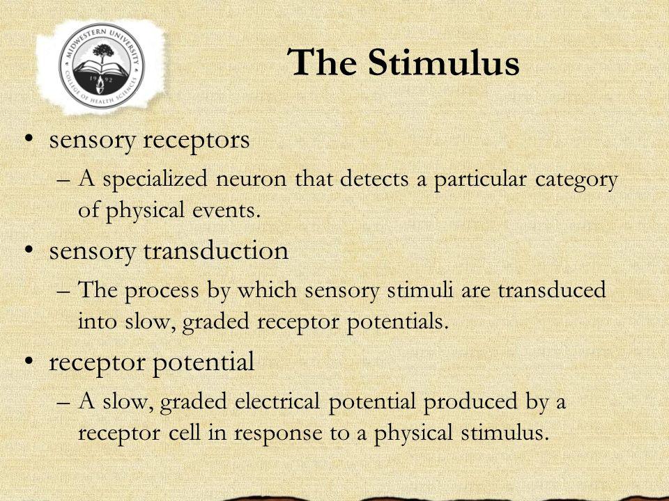 The Stimulus sensory receptors sensory transduction receptor potential