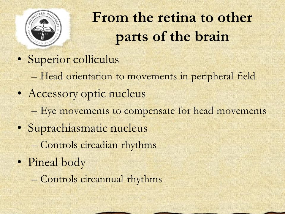 From the retina to other parts of the brain