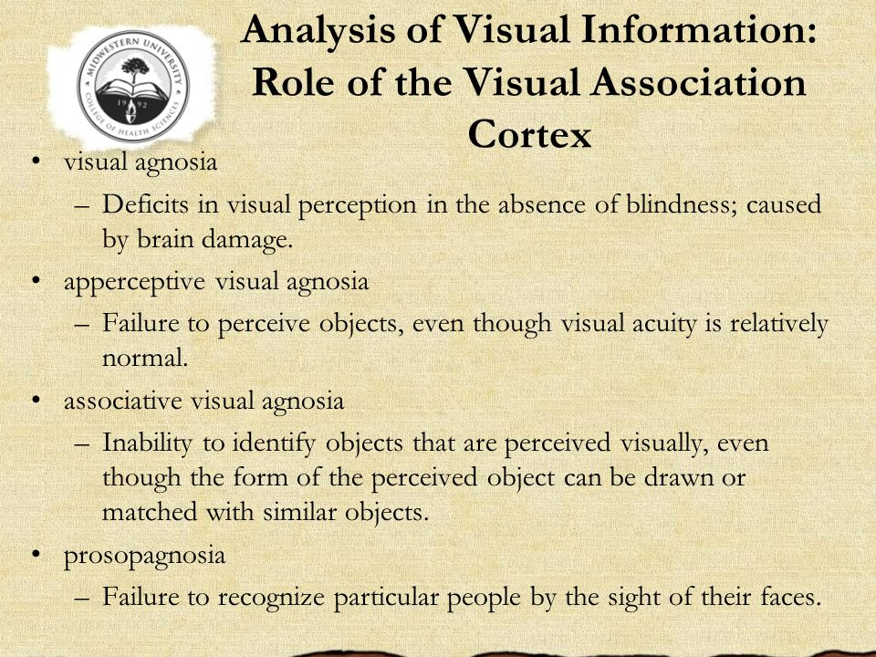 Analysis of Visual Information: Role of the Visual Association Cortex
