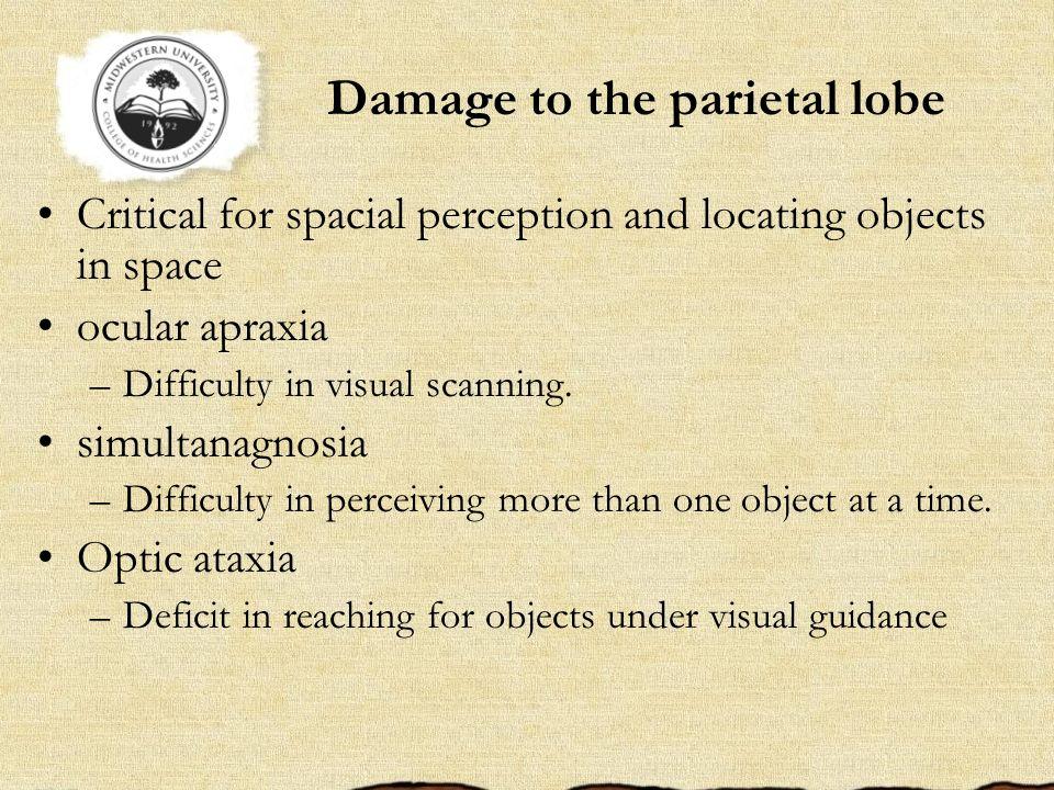 Damage to the parietal lobe