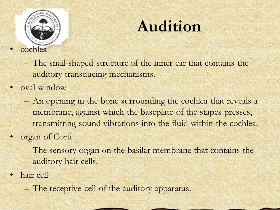 Audition cochlea. The snail-shaped structure of the inner ear that contains the auditory transducing mechanisms.