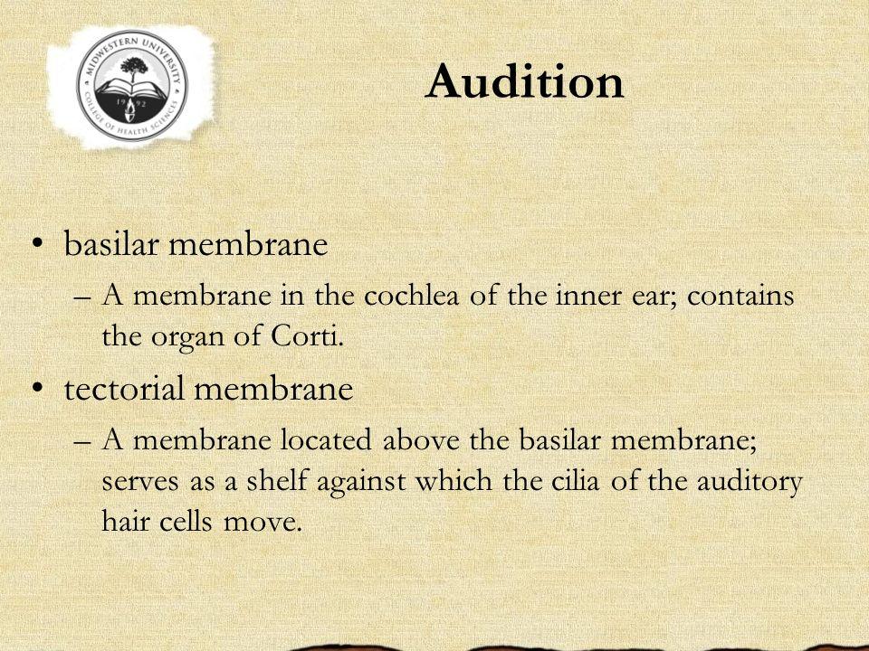 Audition basilar membrane tectorial membrane