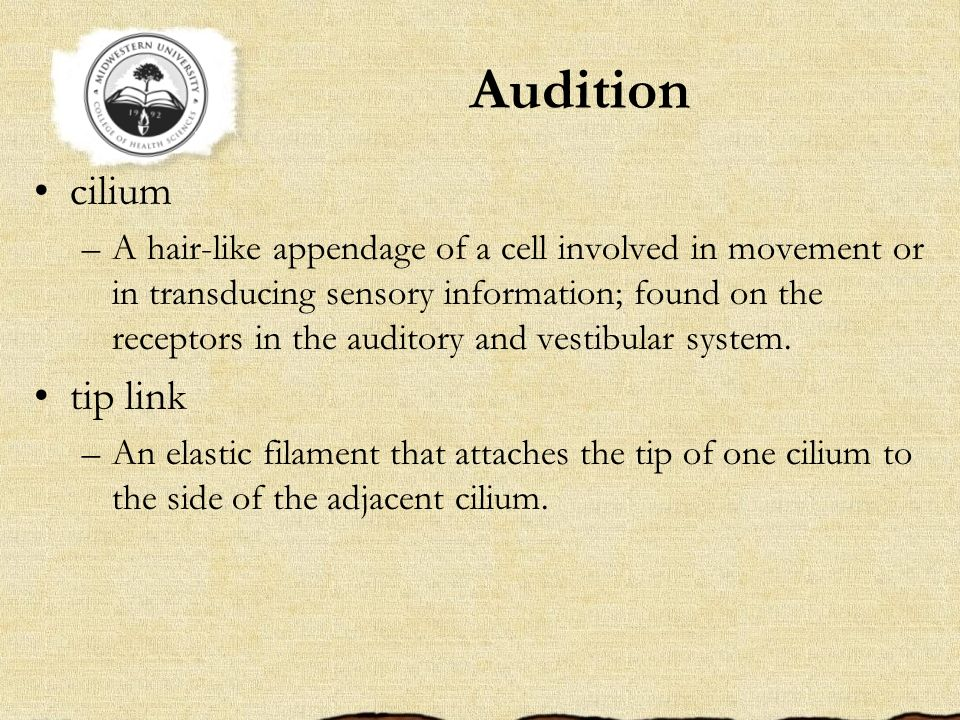 Audition cilium tip link