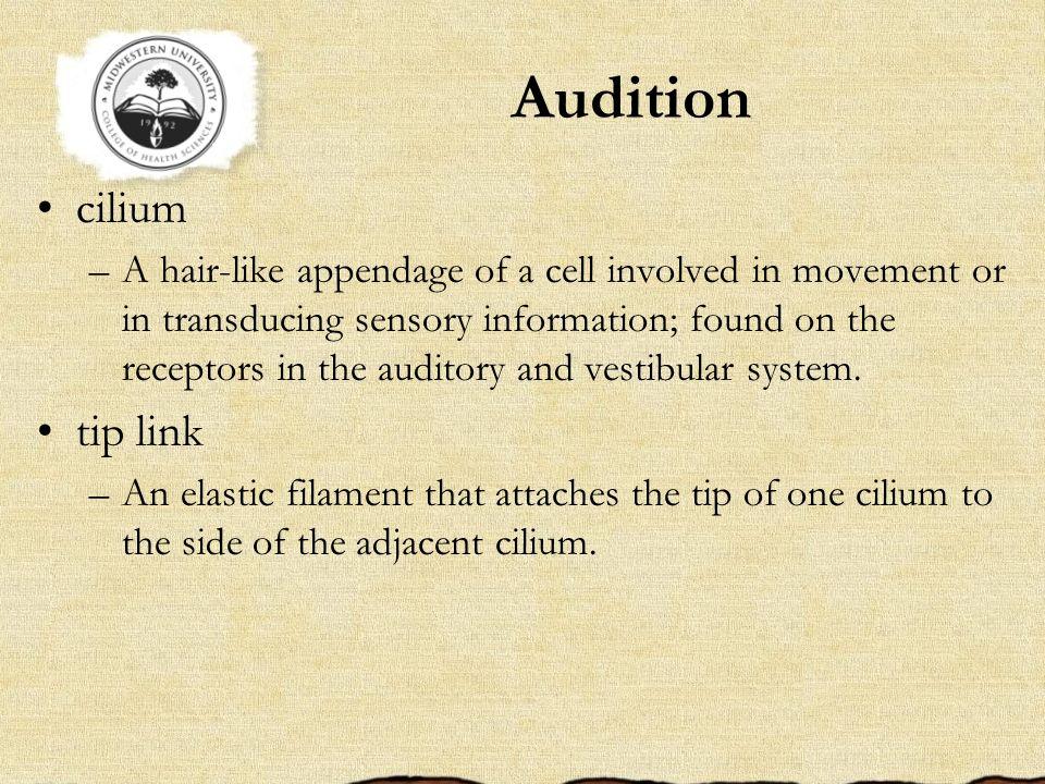 Audition cilium tip link