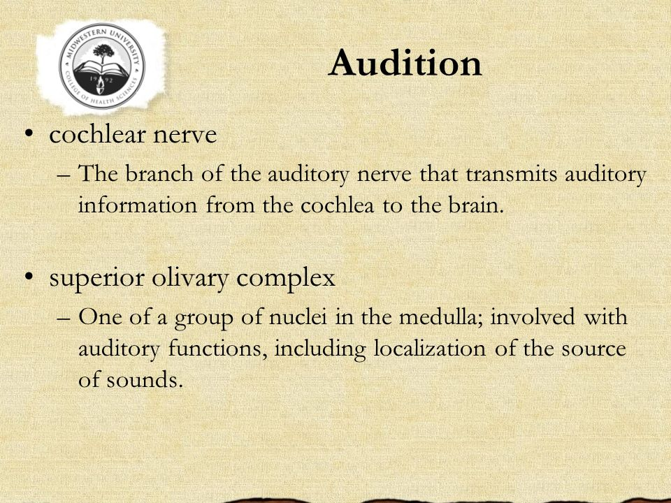 Audition cochlear nerve superior olivary complex