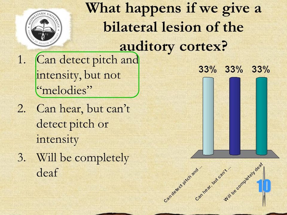 What happens if we give a bilateral lesion of the auditory cortex