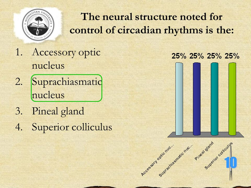 The neural structure noted for control of circadian rhythms is the:
