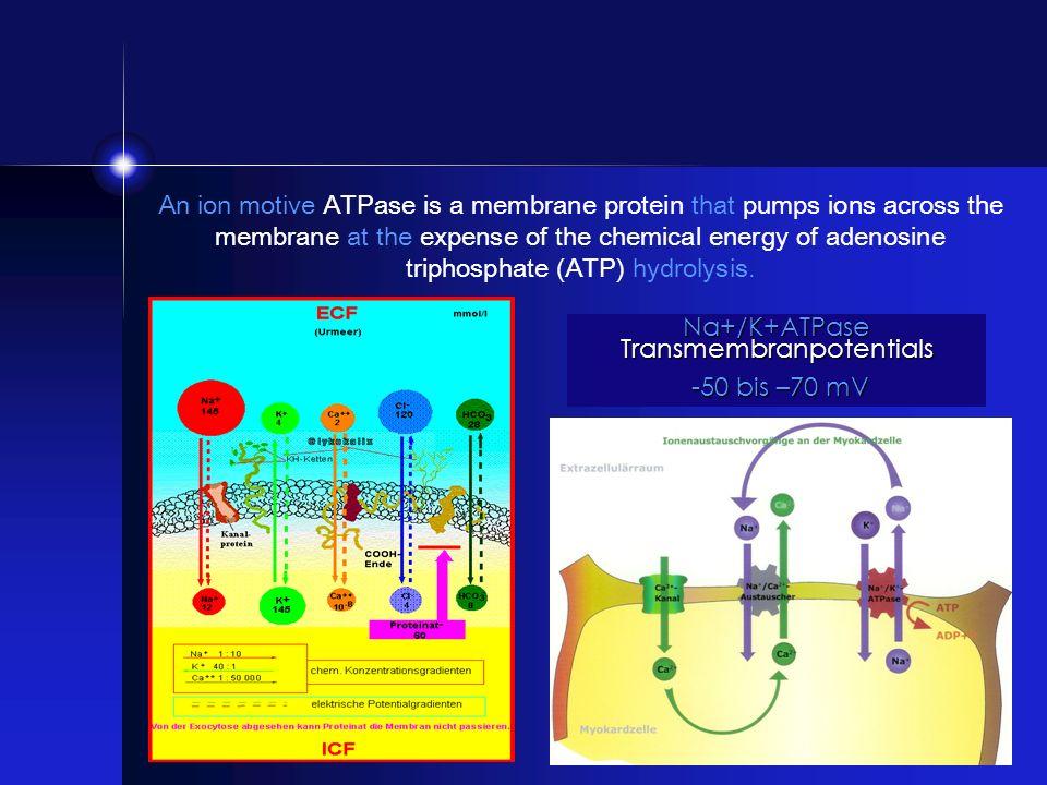 Na+/K+ATPase Transmembranpotentials