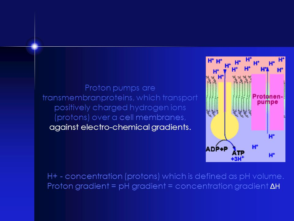 Proton pumps are transmembranproteins, which transport positively charged hydrogen ions (protons) over a cell membranes, against electro-chemical gradients.