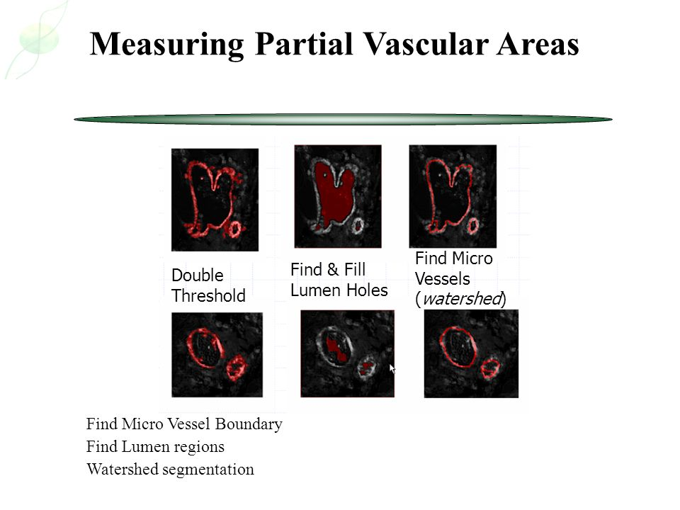 Measuring Partial Vascular Areas