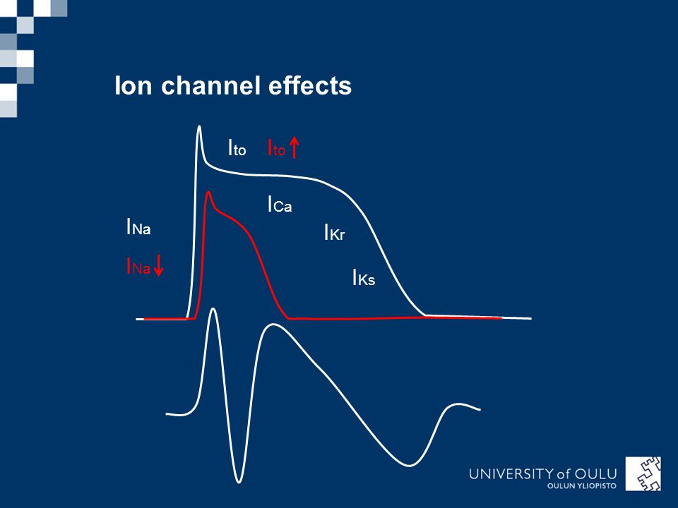 Ion channel effects Ito Ito ICa INa IKr INa IKs